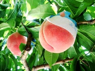 おいしそうな桃♪