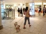 横浜ベイクォーター 犬を連れているヒトも多い